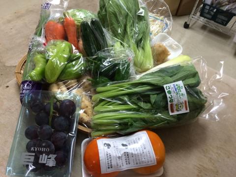 10月14日野菜