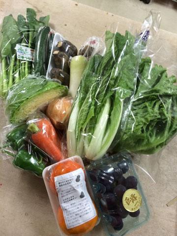10月16日野菜