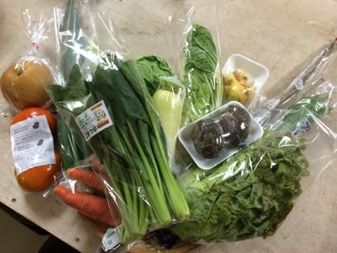 11月11日野菜