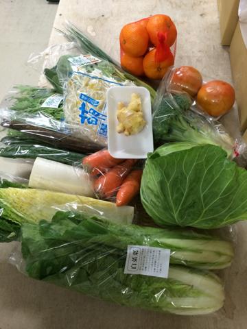 11月13日野菜