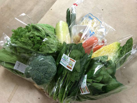 11月14日野菜