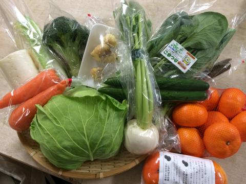 11月18日野菜