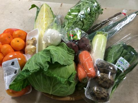 11月20日野菜