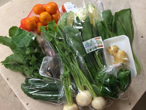 11月4日野菜