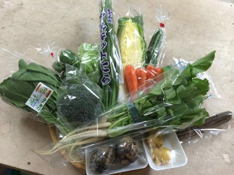 11月7日野菜