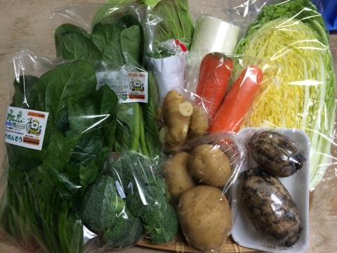 1月26日野菜