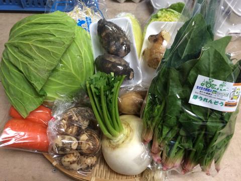 1月9日野菜