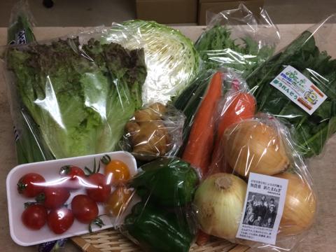 6月4日野菜