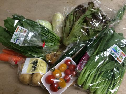6月8日野菜