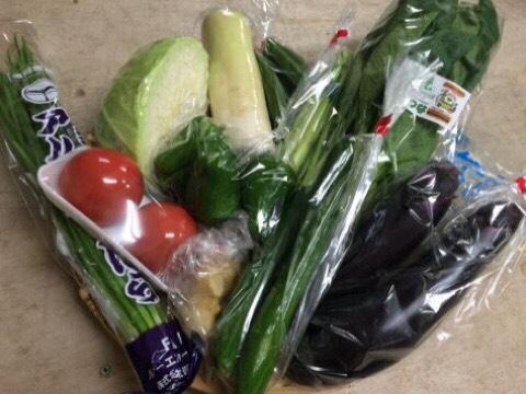 8月25日野菜
