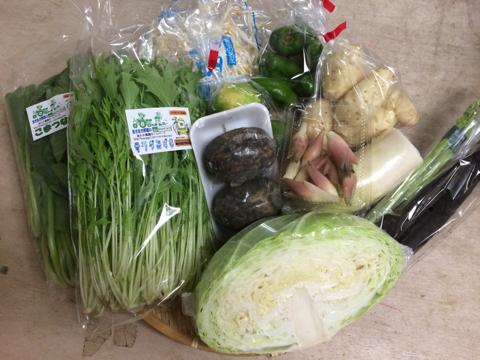 9月10日野菜