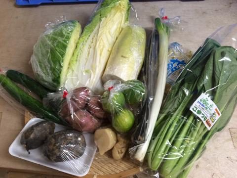 10月1日野菜