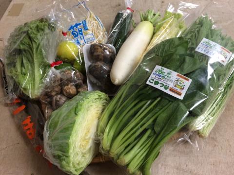 10月15日野菜