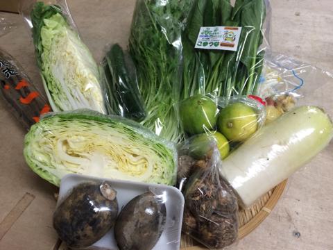 10月19日野菜