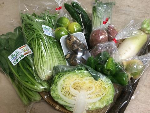 10月2日野菜