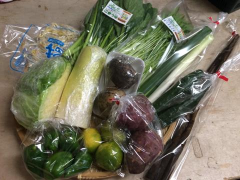 10月6日野菜