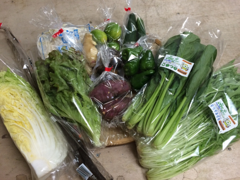 10月8日野菜
