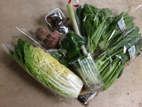 10月9日野菜