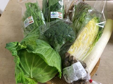 11月16日野菜