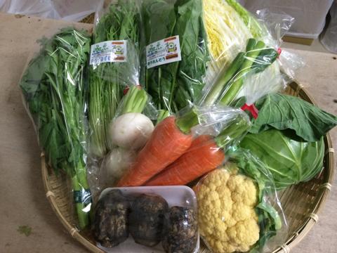 11月26日野菜