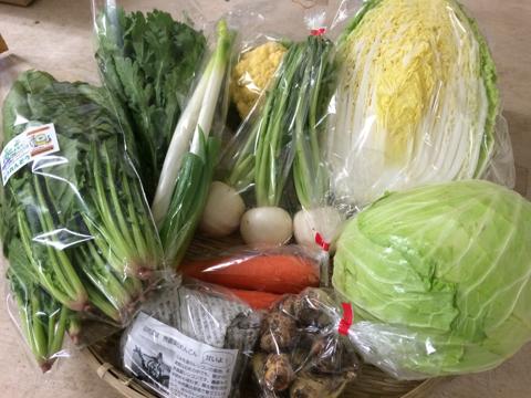 11月30日野菜