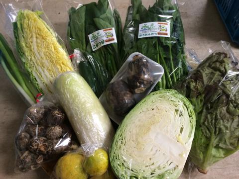 11月9日野菜