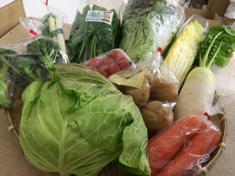 2月16日野菜