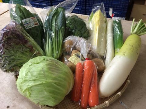 2月19日野菜