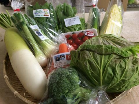 2月25日野菜
