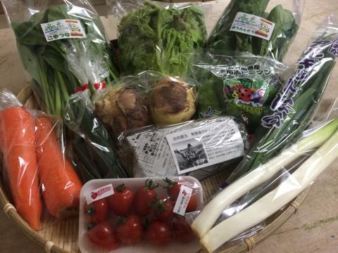 4月12日野菜