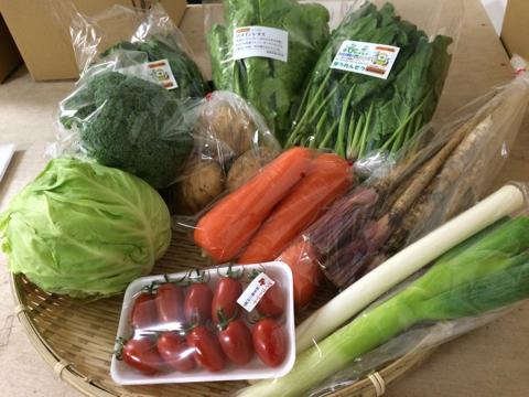 5月16日野菜