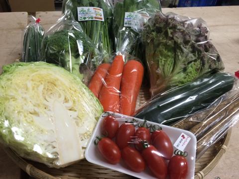 5月20日野菜
