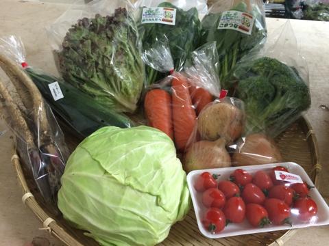 5月26日野菜
