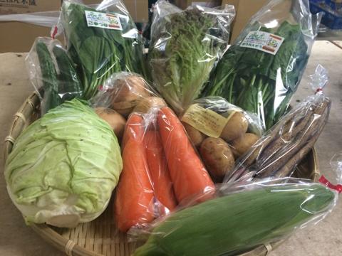 5月31日野菜