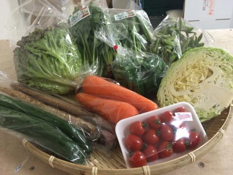 6月10日野菜