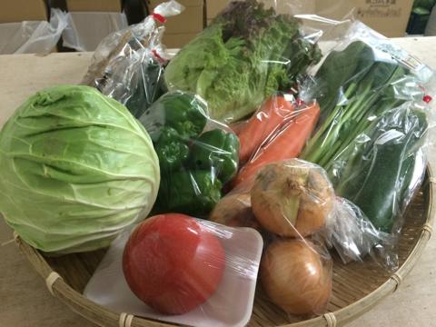 6月13日野菜
