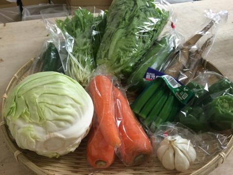 6月14日野菜