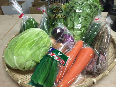 6月16日野菜