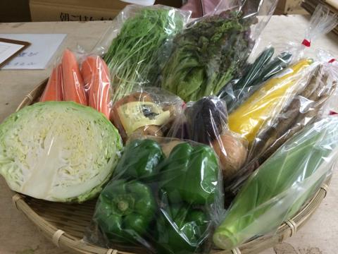 6月21日野菜