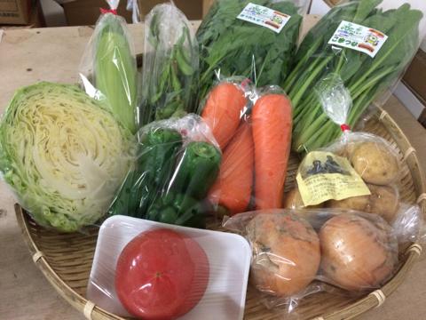 6月6日野菜
