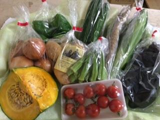 7月29日野菜