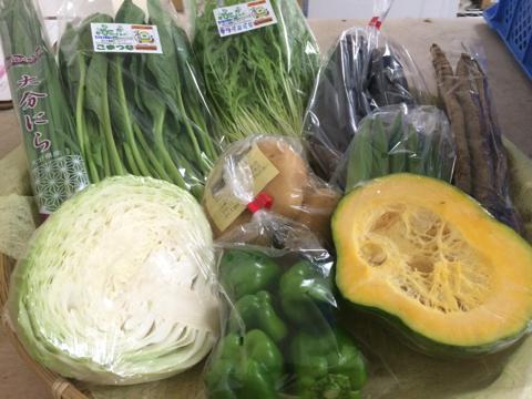 8月19日野菜