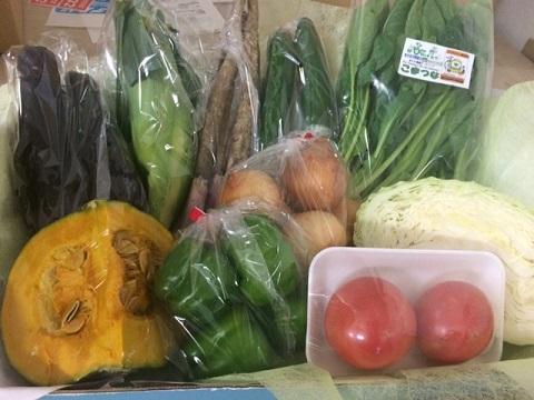 8月2日野菜