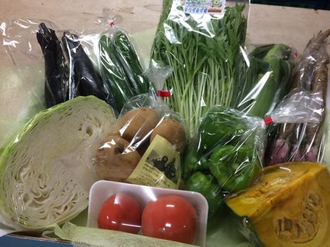 8月5日野菜