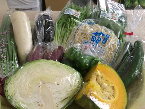 9月2日野菜