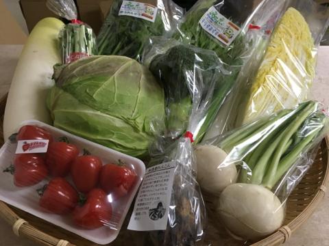 1月24日野菜