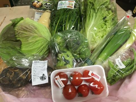 3月2日野菜
