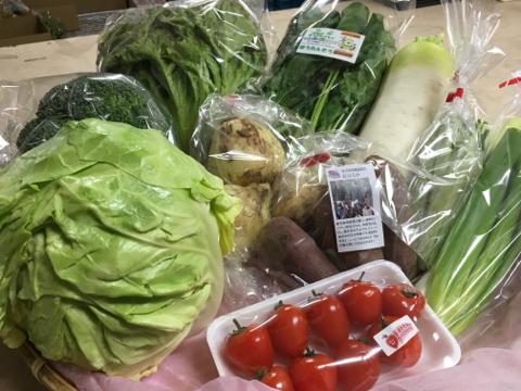4月7日野菜