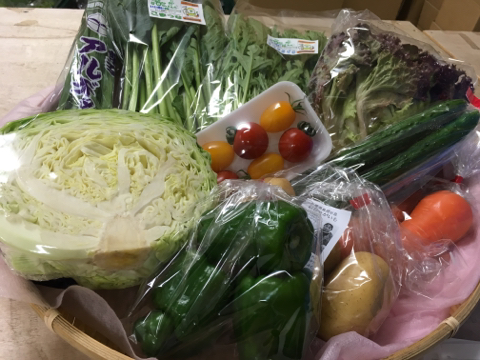 6月9日野菜