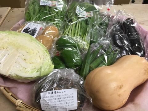 9月12日野菜